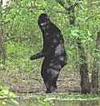 bigfoot running