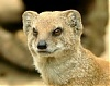 Mongoose's Avatar