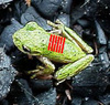 frogfunk's Avatar