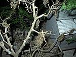 Dreadnok swamp hideout-048_deck.jpg