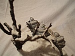 Snow Serpent Diorama-7.jpg