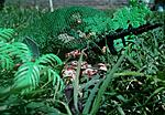 Ambush 1990-img-20190303-wa0089-1.jpg