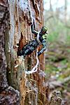 Alpine kitbash-fb_img_1618656361669.jpg