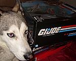 Illinois G.I. Joe Sightings-guarddog.jpg