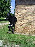 Arkansas G.I. Joe Sightings-s5031747.jpg