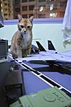 USS FLAGG owners, UNITE !-_dsc5317.jpg