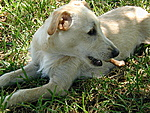 Dog Owners at Hisstank?-p1010119.jpg