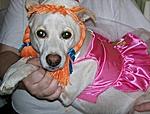 Dog Owners at Hisstank?-fredrica.jpg
