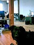 Dog Owners at Hisstank?-kona.jpg