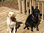 What kind of pet do you have?-camera-pics257.jpg