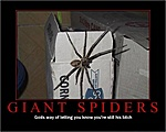 Wolf Spider in your home?-giantspiders.jpg