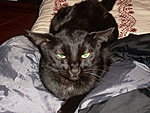my cat is in heat,what should i do?-snow-day-051.jpg