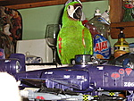 Holiday pics. of pets-army-023.jpg