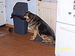 What kind of pet do you have?-100_0969.jpg