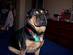 What kind of pet do you have?-katie-078.jpg