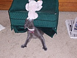 What kind of pet do you have?-kodak-camera-pics-006.jpg