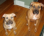 What kind of pet do you have?-mercedes-denali.jpg
