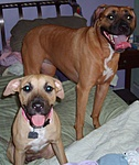 What kind of pet do you have?-s5000306.jpg