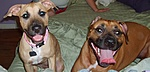 What kind of pet do you have?-s5000304.jpg