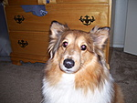 What kind of pet do you have?-100_0394.jpg